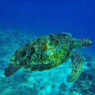 indonesie-lombok-gili-air-zeeschildpad_1_387449