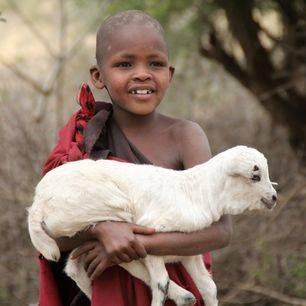 Tanzania-Masai-Schaap
