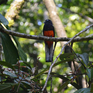Costa-Rica-Kleurrijke-Vogel(5)