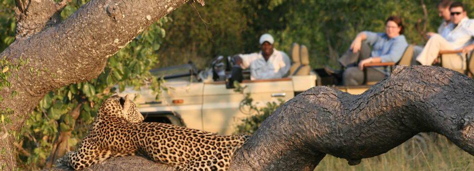 Manyaleti-Wildreservaat-Luipaard