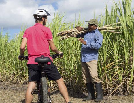 Mauritius-Suikerriet-Fietsen_1_387112
