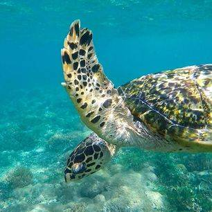 Indonesie-Lombok-Gili-Asahan-schildpad