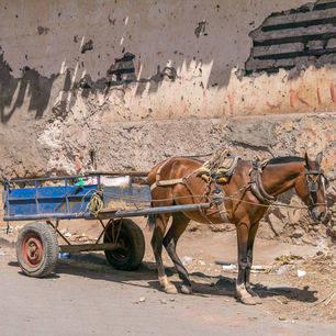 Nicaragua-Granada-paard-en-wagen-3_1_388357
