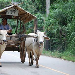 Thailand-lisulodge12(8)