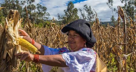 Vrouw aan het werk op het land in een dorp nabij Otavalo, Ecuador