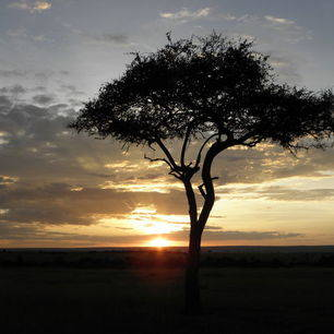 Afrika-Kenia-MasaiMara-zonsondergang_1_312923