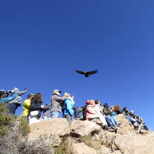 Spot-de-condor-met-gespreide-vleugels(10)