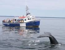 Walvissen Spotten vanuit Digby