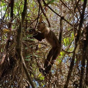 Colombia-TayronaNP-aap-jungle_1_482630