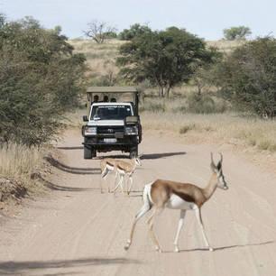 Northern Cape Kgalagadi Transfrontiers Park (11)
