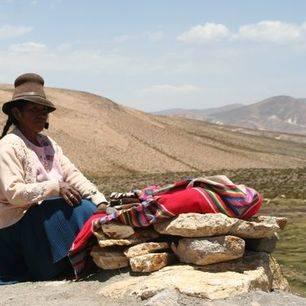Peru-Colca-Canyon-Alpaca