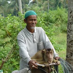 Local met aap op zijn fiets in Penang