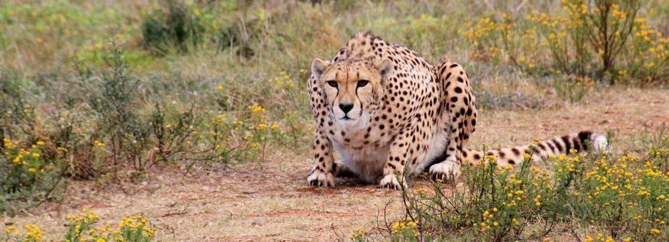 Vindt de Big 5 in Addo National Park, Zuid-Afrika