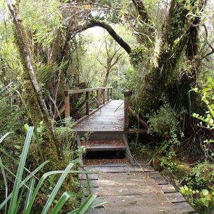Chili-Chiloe-Nationaal-Park_1_432733