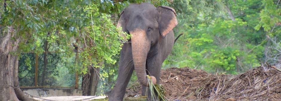 Sri-Lanka-OmgevingGalle1