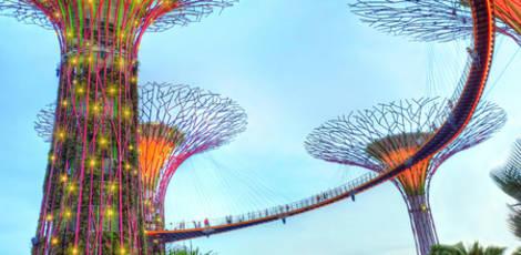 Singapore trees