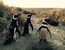 Naar de pinguïns van El Pedral