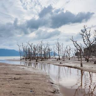 Sarawak-BakoNP-deadtrees10(8)