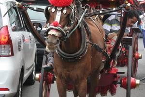 Bukittinggi: Per paard en wagen