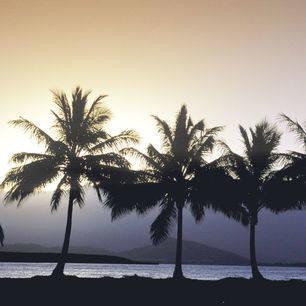 Australie-Airlie-Beach-palmbomen