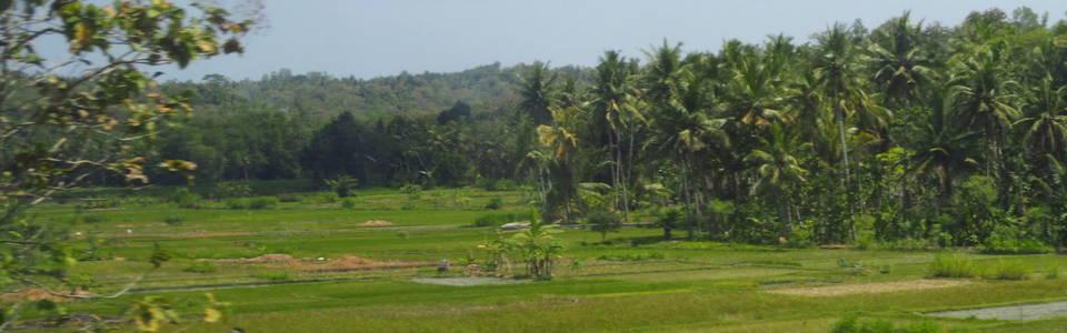 Natuur tijdens treinreis over Java