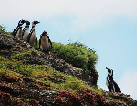 Chili-Chiloe-Pinguins_1_432583