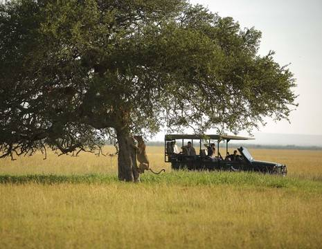 Tanzania-Serengeti-Safari1