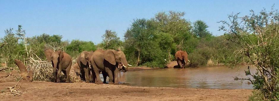 olifanten-drinkplaats-madikwe-zuid-afrika_2_386624
