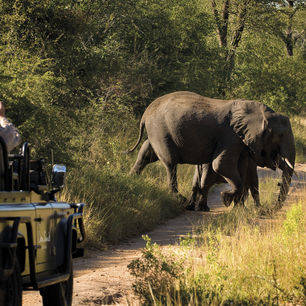 Zuid-Afrika-Sabi-Sands-Olifant