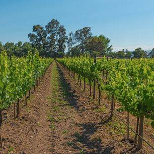 Chili-Maipo-Valley-wijngaarden-1