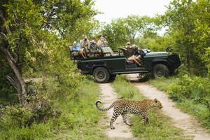 Dieren spotten tijdens een safari door het Sabi Sands wildreservaat in Zuid-Afrika