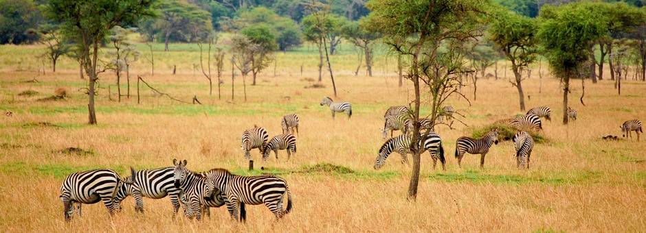 Tanzania-Serengeti-zebra