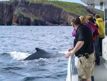 Walvissen Spotten vanuit Trinity