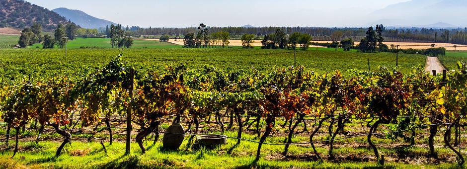 Chili-Maipo-wijngaarden-3_1_432603