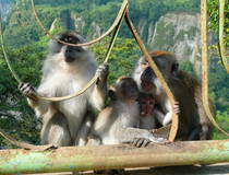 Bukittinggi: Wandelen door Sianok Canyon