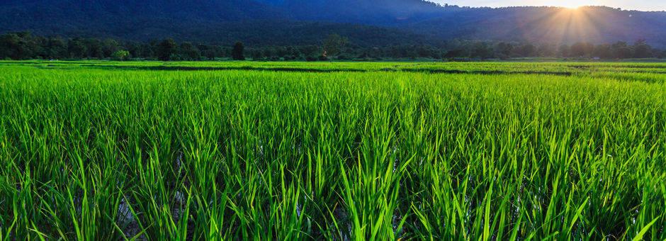 Thailand-noord-landschap2-omgeving-chiangmai.jpg   123-27753167_l(13)