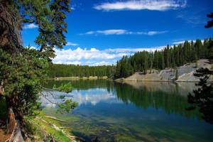 Amerika-Yellowstone-Hayden-Valley