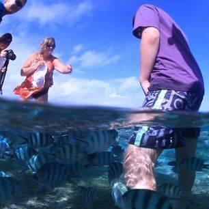 Australie-Lady-Elliot-Island-Eco-Resort-reefwalk_1_537429