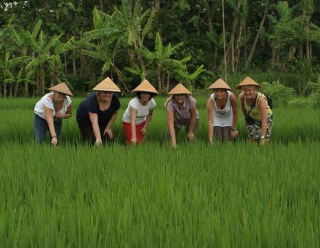Indonesie-Java-Jogyakarta-rijstveld_1_181570