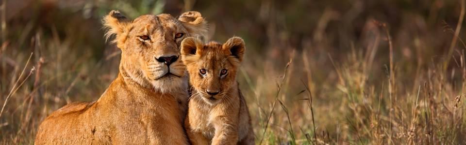 De 6 ultieme tips voor het maken van een Safari!