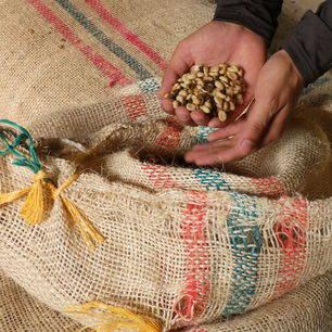 Koffietour op Hacienda Venecia bij Manizales