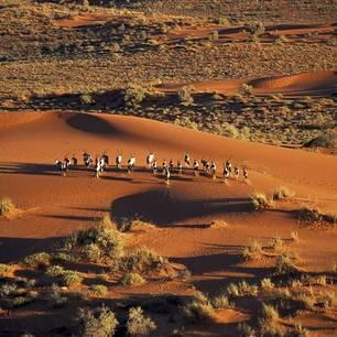 Kalahari woestijn(10)