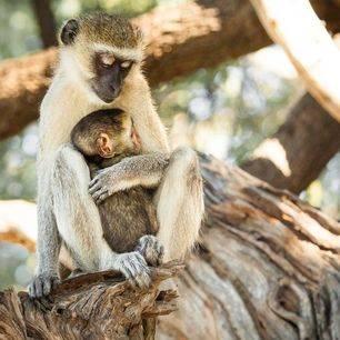 Botswana-Chobe-National-Park-aap_1_365816