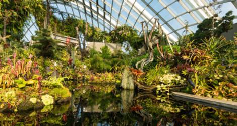 Singapore vegetatie
