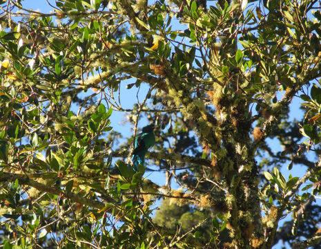 San-Gerardo-de-Dota-quetzal-3-kopie(6)