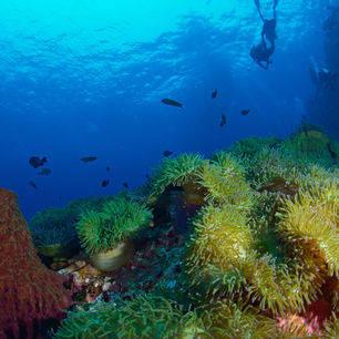 Thailand-KohTao-onderwaterwerld1_2_281813
