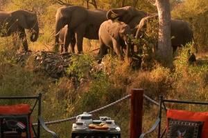 Krugerpark - Hoyo Hoyo Safari Lodge (10) KOPFOTO