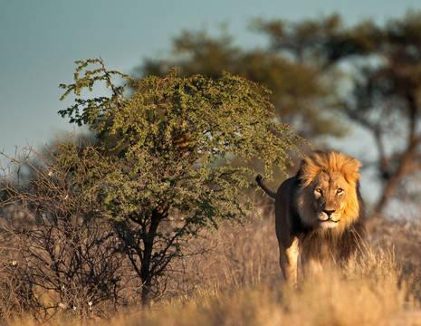 Tanzania-Serengeti-Leeuw1
