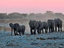 Op safari in Etosha
