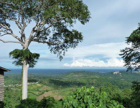 Kalimantan-Balikpapan-Muara Koman-landschap